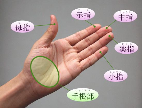 足指 - 1年生の解剖学辞典Wiki